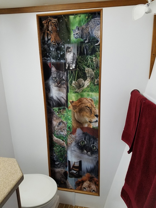 the new cat themed shower curtain