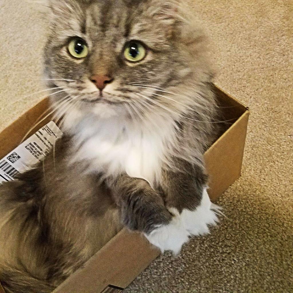 April 23 Tucker in a box
