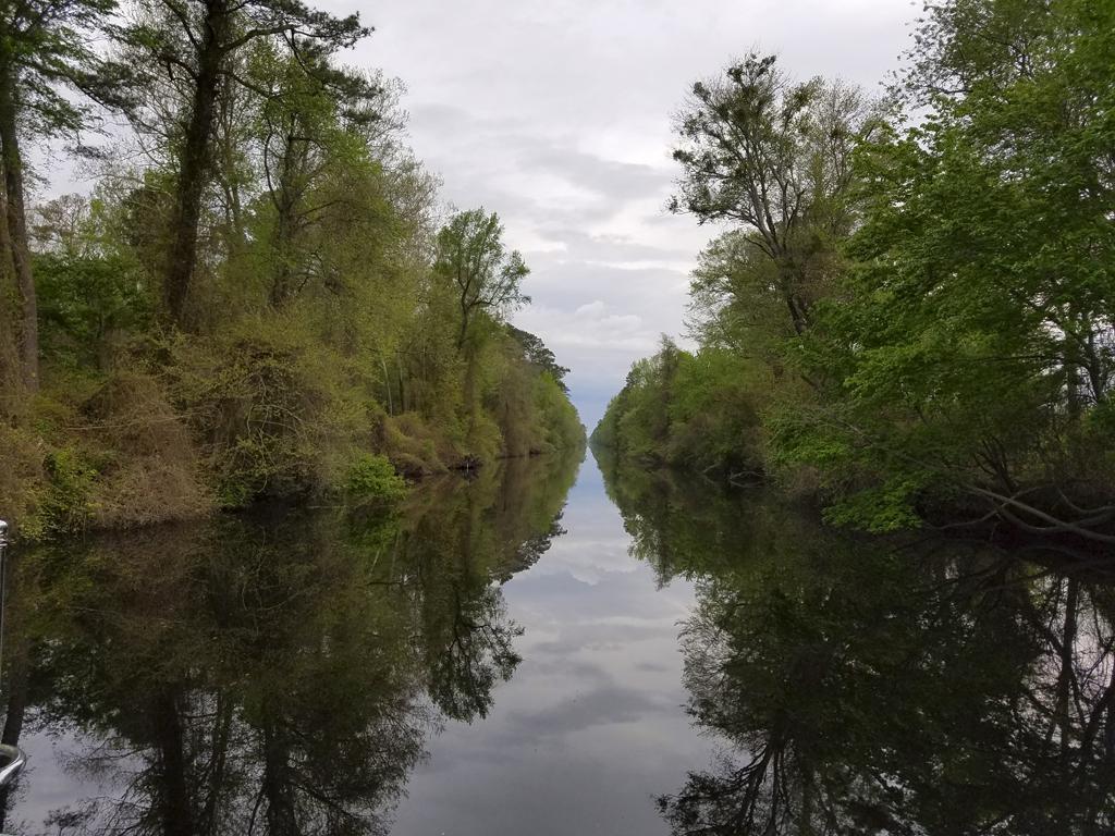 April 27 Great Dismal Swamp 1