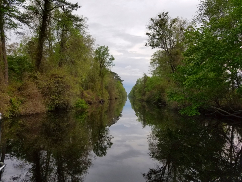 April 27 Great Dismal Swamp 1