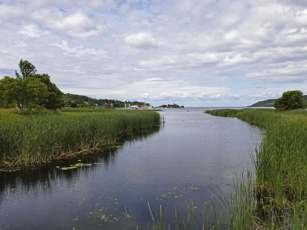 Gore Bay wetlands