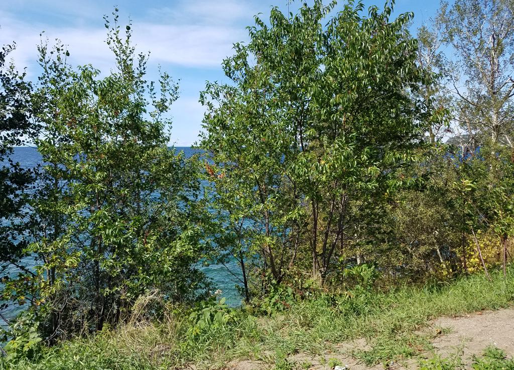Alona Bay viewpoint